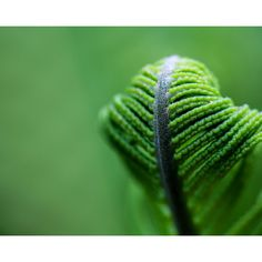 green fern photograph ❤ liked on Polyvore featuring home, home decor, wall art, vintage home decor, green home decor, photo wall art, handmade home decor and fern wall art