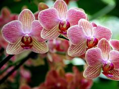 I got: Orchid! What Is Your Signature Flower?