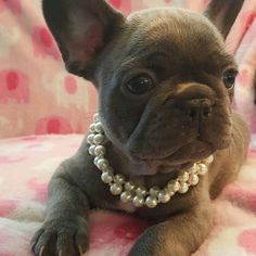 """My mom says to Keep calm and wear pearls, real ones if you can"".... ""I think these are real"", funny French Bulldog Princess."