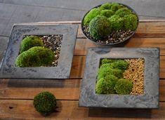 苔の箱庭作りワークショップ風景 : Kitowaの日々