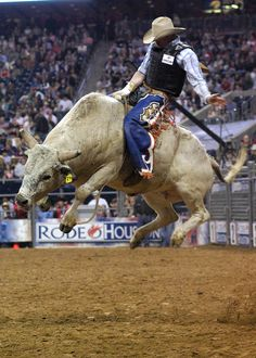 Riding a bull i think would be the freest feeling in the world