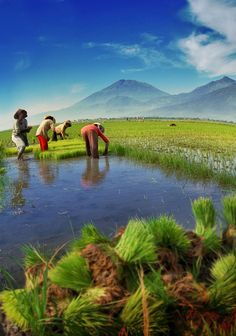 Asia Finest Discussion Forum > Beautiful Pictures of Indonesia