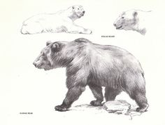 Vintage Bear Book Page from the 1940s