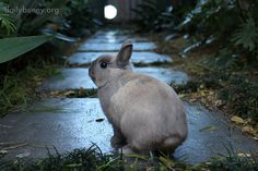 Bunny is about to embark on a big adventure - April 4, 2014 - More at the link: http://dailybunny.org/2014/04/04/bunny-is-about-to-embark-on-a-big-adventure/ !