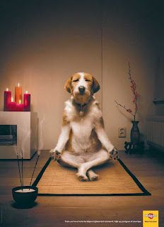 Pedigree Campaign: Train your dog to stay calm during the new years celebration repinned by www.BlickeDeeler.de