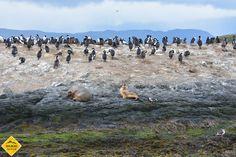 Isla de los pájaros. Ushuaia. Travel and Taste. Foto de Gabriela M. Naso