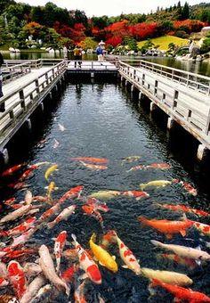 Sankei-en, Hiroshima.Looking for more information aboout…