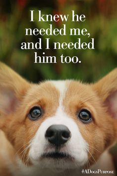 Every dog happens for a reason. | A Dog's Purpose | In Theaters January 27.