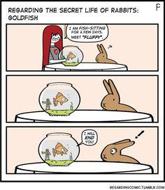 REGARDING THE SECRET LIFE OF RABBITS - Fish Tale!