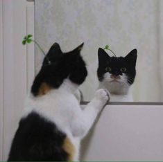 But just why do most cats go so bananas when they see their reflection? Heres what you should know about their strange reaction. Animal Original, Funny Cats, Funny Animals, Gatos Cool, Gato Gif, Cat Aesthetic, Cute Little Animals, Cute Creatures, Pretty Cats
