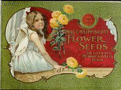 1900 - Miss C.H. Lippincott flower seeds. - Biodiversity Heritage Library