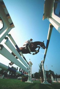 show jumping!