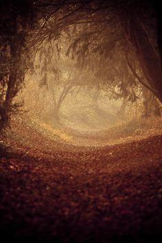 magical autumn woodland forest