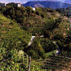Basta piangersi addosso, il #Prosecco salverà il Pil. Presentata la candidatura delle colline del trevigiano per la tutela #Unesco