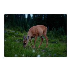 IPad Air Dear Animal Folio Leather Case