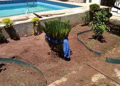 Como fazer um jardim com pedras - 10 passos - umComo