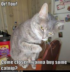 Oi! You!  Come closer...wanna buy some catnip?
