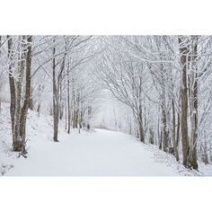 Nature Photography, Snowy Forest, Fine Art, Photo, Print, Snow, Calm,... ($10) ❤ liked on Polyvore featuring home, home decor, wall art, white tree, photo post card, photo wall art, white winter trees and white tree wall art