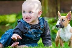 There are many misconceptions surrounding pet allergies. Here are 3 of the major myths, busted.