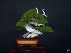 Like clouds, I see different shape everytime I look  Juniperus bonsai by Mario Komsta
