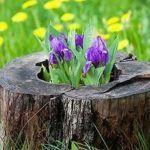Tree Stump For Garden Art_28