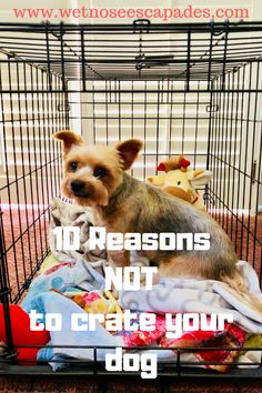 Helping your puppy to become obedient and well trained is simple with your dog training tips and Dog Training Tools, Dog Training Classes, Crate Training, Training Your Dog, Training Videos, Dog Pee, Puppy Care, Pet Care, Dog Travel