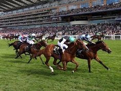 Another favourite of mine won at Royal Ascot today, when GM Hopkins and Ryan Moore (light/dark blue silks) won the Royal Hunt Cup.Royal Ascot meeting Day 2, 17 June 2015.Temptress and James Doyle (green cap) finished second, Chil The Kite and George Baker (white cap) third.Full result here.Photo source: X