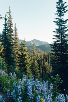 I want to go hiking here with this beautiful view of nature.