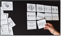 Mitosis card sort activity - great interactive lesson!
