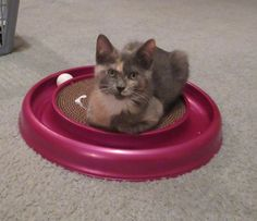 Ginger, 12/15, on their new toy. They have had hours of enjoyment playing in the shipping box.