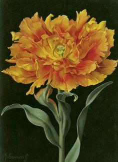 huariqueje:  Orange double early tulip -  Jan Voerman Jr. Dutch 1890-1976 Oil on canvas laid down on board