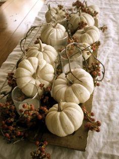 Small white pumpkin centerpieces