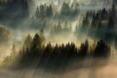 Картинки по запросу солнечный туман