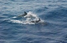 According to a new survey from the Sea Watch Foundation, there have been more sightings of dolphins and whales in Cornwall than ever before!