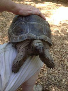 Turtles having sexual harassment