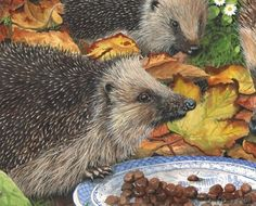 hedgehog painting by tracy hall