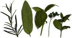 10 easy ways to preserve herbs