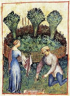 """Asparagus from The Tacuinum Sanitatis, a medieval handbook on healthlargely focusing on the growing & preparation of food, based on the Taqwim al‑sihha تقويم الصحة (""""Maintenance of Health""""), an 11th-century Arab medical treatise by Ibn Butlan of Baghdad. Four handsomely illustrated complete late 14th-century manuscripts of the Taccuinum, all produced in Lombardy, survive, in Vienna, Paris, Liège, and  Rome."""