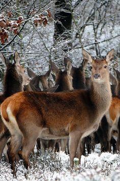 Kostenloses Stock Foto zu kalt, schnee, natur, wald