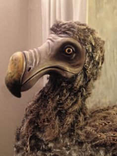 dodo bird | Homepage of Filmmaker Matt Snyman