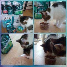 Nasze koty rozsmakowały się w PurinaONE! #purinaone #3tygodniezone #widoczniedobre #rekomendujto #koty #cats #wyzwanie