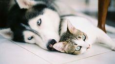 Come scoprire se cani e gatti soffrono di allergie