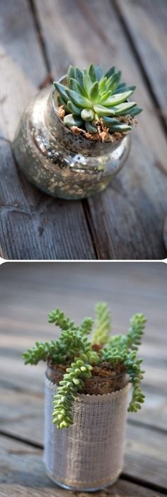 How to Grow succulent plants