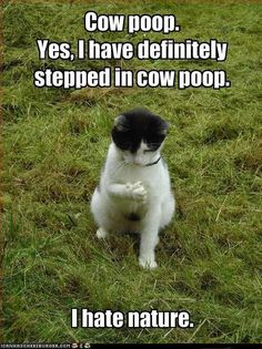 Cow poop...
