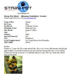 Missing Yorkshire Terrier!