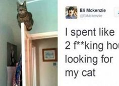 10 Funny As Hell Cat Pictures That Went Viral On The Internet Just This Year