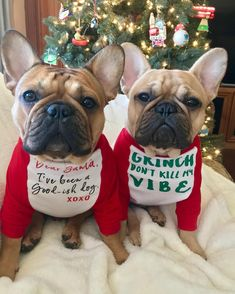 Frank & Oliver, French Bulldogs at Christmas ❤️
