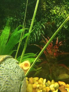 Keeping Planted Tanks On Pinterest Aquarium Betta Tank And
