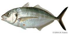 Something Else to Eat: Mediterranean fish bake