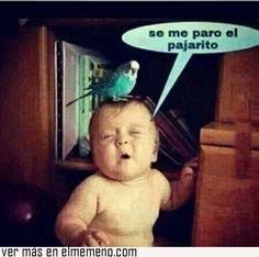 Literal @ www.elmemeno.com